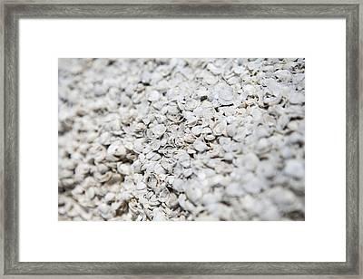 Shell Beach, Shark Bay, Australia Framed Print by Science Photo Library