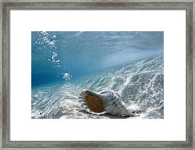 Shell Burp Framed Print by Sean Davey