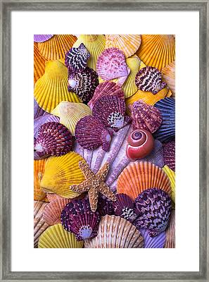 Shell Collection Framed Print by Garry Gay