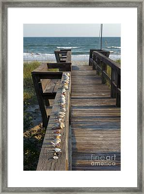 Shell Collection Framed Print by Kay Pickens