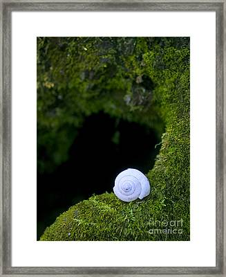 Shell Framed Print by Jonathan Welch