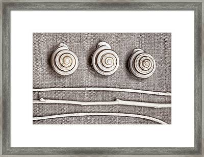 Shells And Sticks Framed Print by Carol Leigh