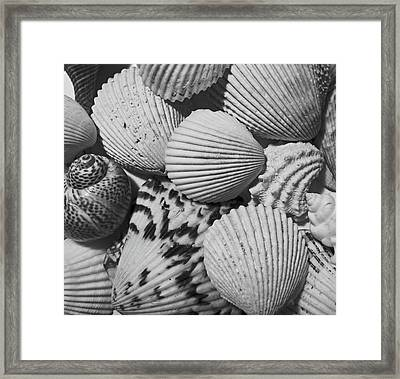 Shells In Black And White Framed Print by Mary Bedy