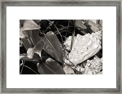 Shells In The Garden Framed Print by Ethan Allen
