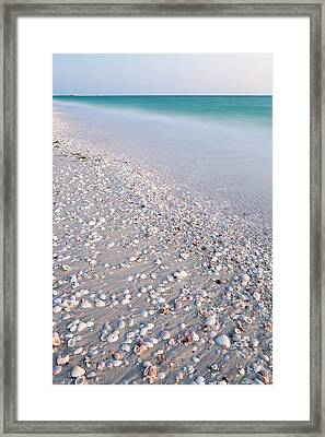 Shells In The Sand Framed Print by Adam Pender