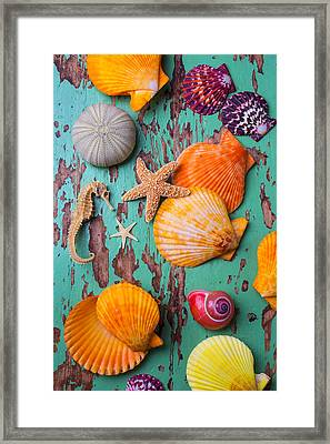 Shells On Old Green Board Framed Print by Garry Gay
