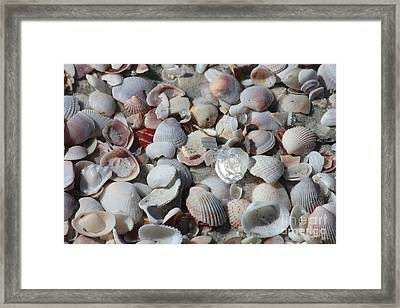Shells On Treasure Island Framed Print by Carol Groenen