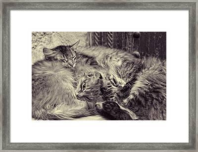 Sheltered Framed Print by Studio Yuki