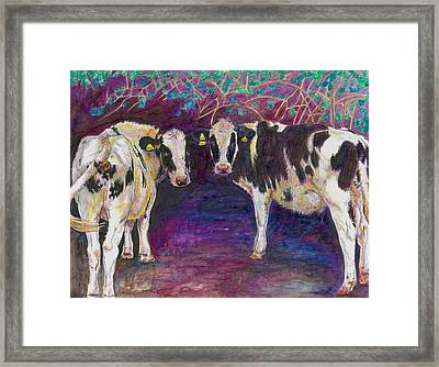 Sheltering Cows Framed Print by Helen White