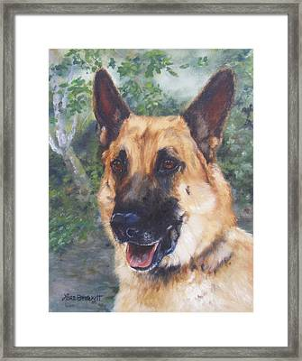 Shep Framed Print by Lori Brackett