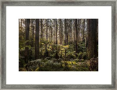 Sherbrooke Forest Framed Print by Shari Mattox