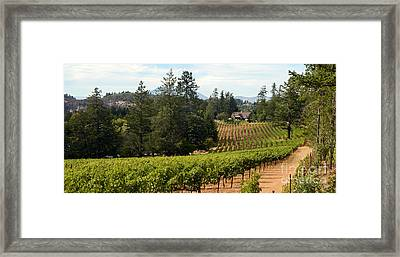 Sherwin Family Vineyards Framed Print by Jon Neidert