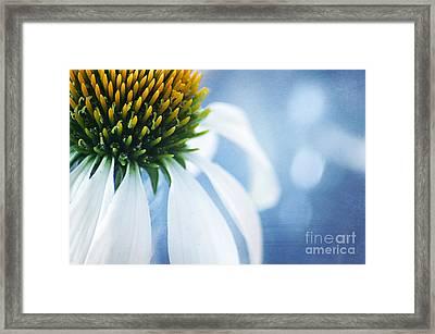 She's A Little Blue Framed Print by Darren Fisher