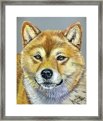 Shiba Inu - Suki Framed Print by Michelle Wrighton