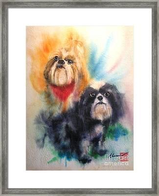 Shih Tsu Siblings Framed Print by Alan Goldbarg