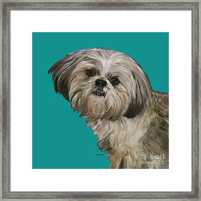 Shih Tzu On Turquoise Framed Print by Dale Moses