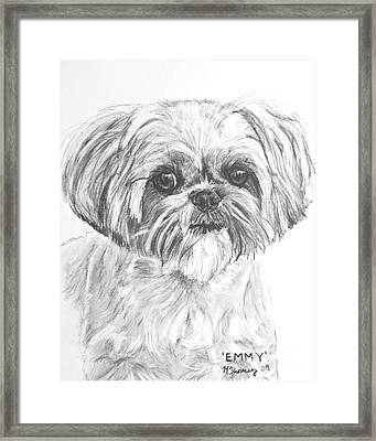 Shih Tzu Portrait In Charcoal Framed Print by Kate Sumners