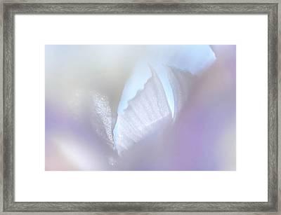 Shimmering Light. Iris Series Framed Print by Jenny Rainbow