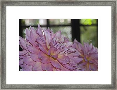 Shine Bright Like A Diamond Framed Print by Trish Tritz