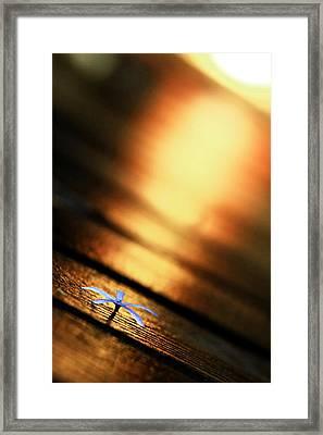 Shine On Me Framed Print by Suradej Chuephanich