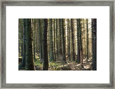Shine Through The Forest. Framed Print by Daniel Kay