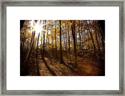 Shining Sun In The Woods Framed Print by Kamil Swiatek