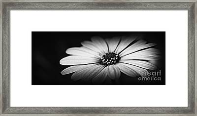 Shining Through Framed Print by Clare Bevan