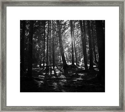 Shining Through Framed Print by Nicklas Gustafsson