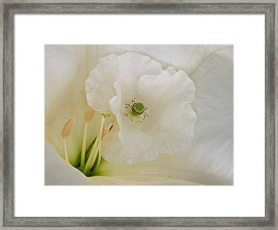 Shirley And The Moonflower Framed Print by Chris Berry