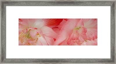 Shirley Poppies Framed Print by Theresa Tahara
