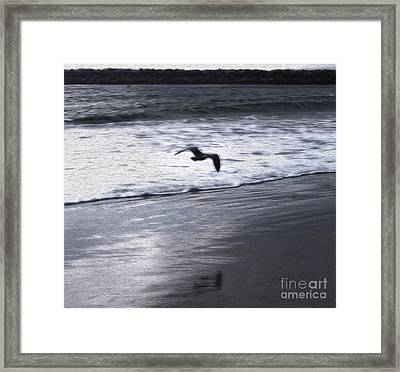 Shore Bird -02 Framed Print by Gregory Dyer