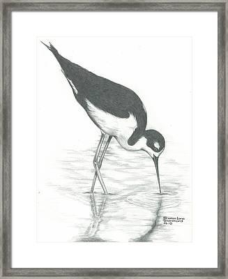 Shore Bird Framed Print by Sharon Blanchard