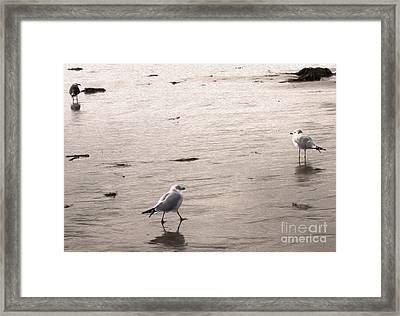 Shore Birds - 01 Framed Print by Gregory Dyer