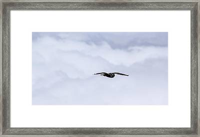 Short Eared Owl Above The Clouds Framed Print by Brad Scott