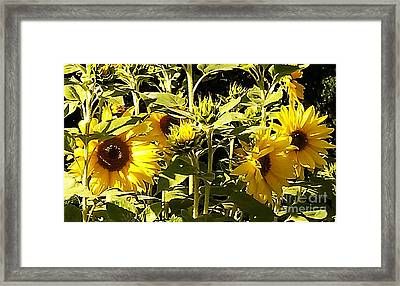 Shout Out Summer Framed Print by Martin Howard