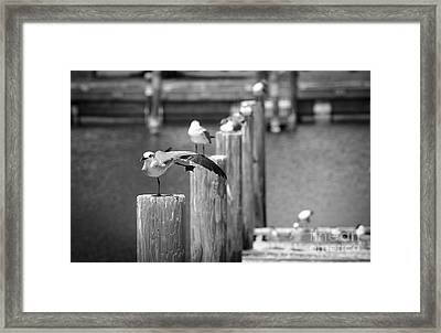 Show Off Black And White Framed Print by Jason Moynihan