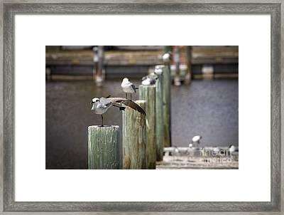 Show Off Framed Print by Jason Moynihan