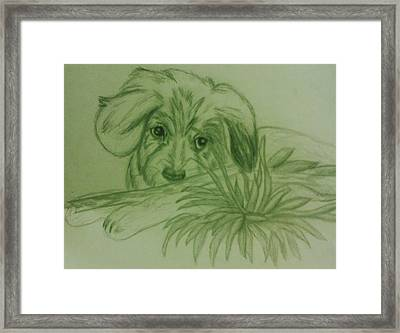 Shy Puppy Framed Print by Christy Saunders Church