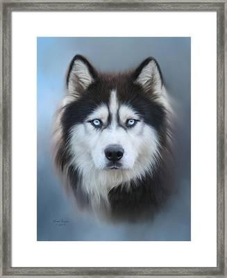 Siberian Husky Framed Print by Lena Auxier