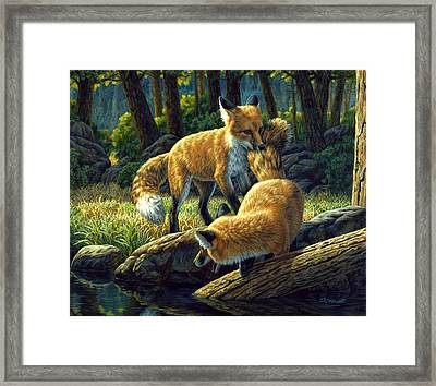 Red Foxes - Sibling Rivalry Framed Print by Crista Forest