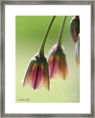 Sicilian Honey Garlic Framed Print by J McCombie