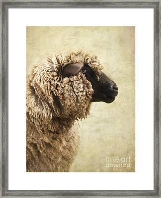 Side Face Of A Sheep Framed Print by Priska Wettstein