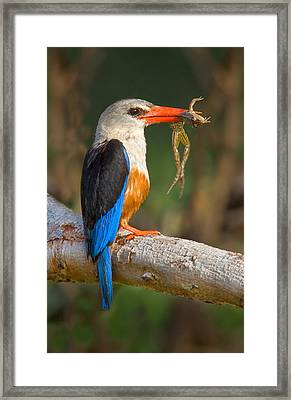 Side Profile Of A Bird With A Frog Framed Print by Panoramic Images