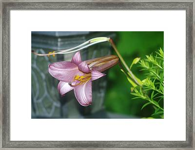 Sideview Of Beauty Framed Print by Jeff Swan