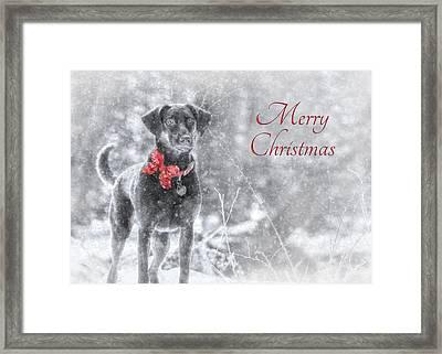 Sienna - Merry Christmas Framed Print by Lori Deiter
