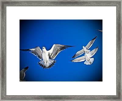 Siesta Key Sea Gulls Framed Print by Andrea Floyd