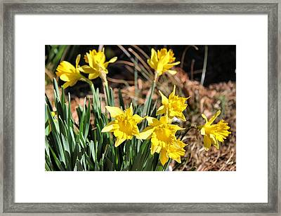 Sign Of Spring Framed Print by Carolyn Ricks