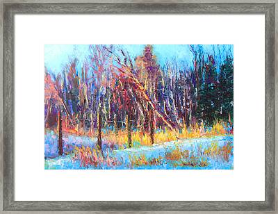 Signs Of Spring - Trees And Snow Kissed By Spring Light Framed Print by Talya Johnson
