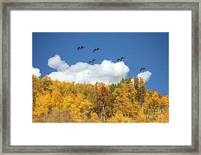 Signs Of The Season Framed Print by Bob Hislop