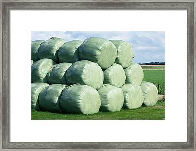 Silage Bales Framed Print by Dirk Wiersma